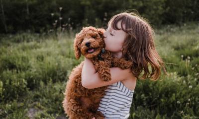 Dit zijn de beste hondenrassen voor mensen met kinderen